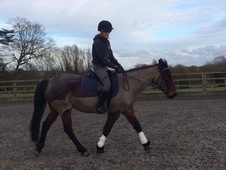 14. 3hh Mare To Loan/Share