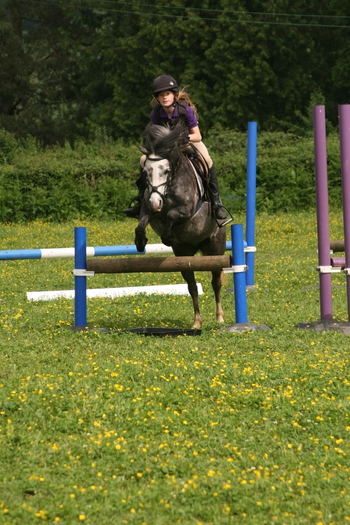 12hh welsh section a lead rein/ second pony