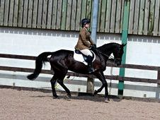 17hh Stunning Gelding for Part/Full Loan
