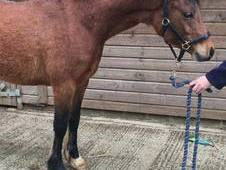 Potential Juniors Pony