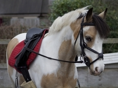 Wanted 13hh-14hh Loan Pony All rounder