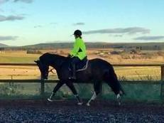 Riding Club Horse for Sale