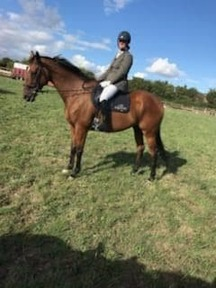 16.2 Thoroughbred Gelding