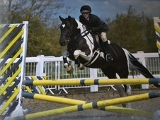 Competition pony for sale
