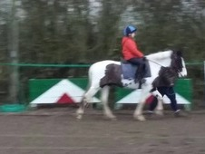 13. 2 Smart all rounder/riding club pony