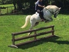 Super sec A mare pony club jumping