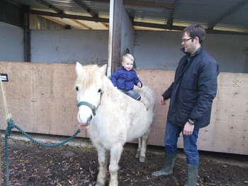 Gorgeous Welsh Section A 12.2hh pony for loan