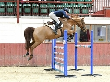 Billy - showjumper eventer