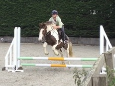 Potential All rounder/pony club/hunting pony