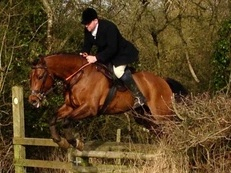 16hh ISH good all rounder 8 yo bay gelding