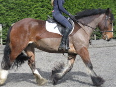 SUPER FAMILY COB/ALROUNDER