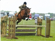 Talented 143cm working hunter/ event pony