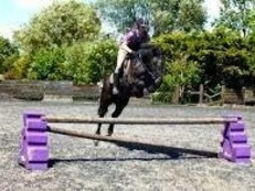 Teenagers Dream Hunter/Jumper