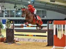 Extreme Allrounder! 16.2hh Bay Mare