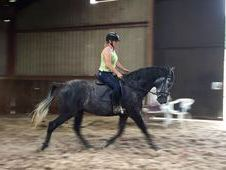 PRE Gelding with a great character
