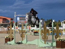 Showjumping Groom to start ASAP