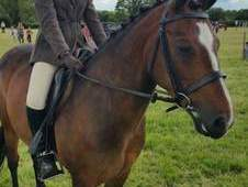 Gorgeous 13.2hh mare, offers considered