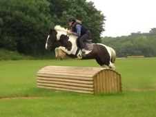 Dream childs fun/competition pony! (Consider Short loan veiw to ...