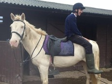 110% bombproof 14.1hh cremello gelding 11 years old