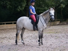 Lovely 14. 2hh Companion for Loan