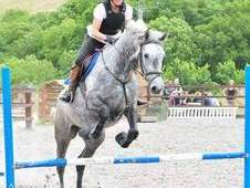 Quality All Rounder / Riding Club IDx