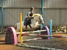 14.1 11yr old gelding All Rounder