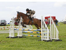 Quality All rounder Riding Club Horse