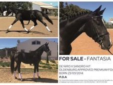 DeNiro/Sandro Hit premium filly