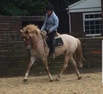 Supper allround pony club or bs pony