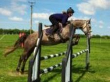 Beautiful grey 15. 3hh Irish Sport Horse mare with top breeding r...