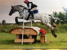 Super talented eventing pony