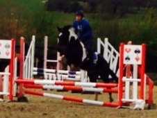 15. 2hh all rounder