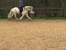 Mother daughter share/show potential/dressage all rounder/bombproof