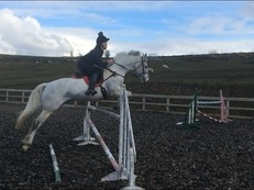 Talented Sports Horse for sale