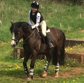 Lovely 13.2hh welsh jumping/ pony club pony/ all rounder