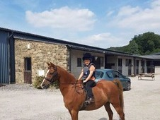 12. 3 British riding pony for full loan