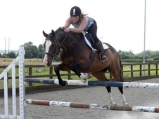 Warmblood all rounder