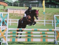 Quality showjumper/ alrounder