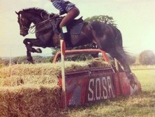 Stunning 16. 3hh Thoroughbred - For Share/Loan