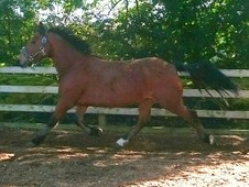 Project pony mare*quick sale*