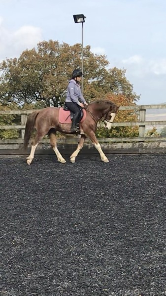 Wanted - Horse to share