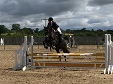 9 year old 16hh Irish sports horse