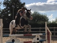 BEAUTIFUL SECOND PONY / JUMPING PONY