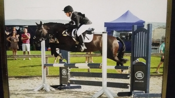 14.1hh all rounder
