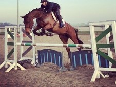 Carla - Super smart competition horse!