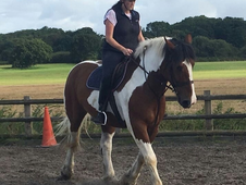 16. 2 Coloured ID X Gelding for Part Loan