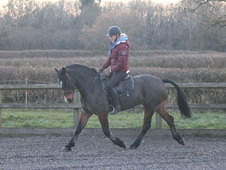 Fantastic allrounder for sale