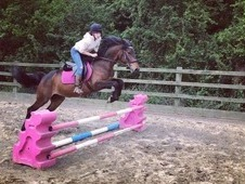 Gorgeous Welsh Part Bred 14. 2/3hh Mare