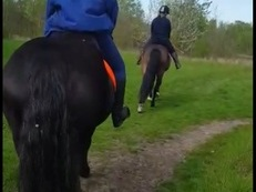 Gelding project for loan 2-5 days. 15.1hh NO NOVICES OR U18S!