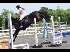 16.1hh 6yr old clover hill mare